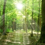 green-forest-sunlight-and-shadows